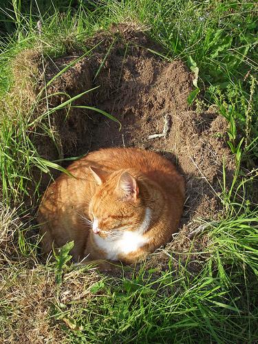 恥ずかしくて、穴があったら埋まってたい……