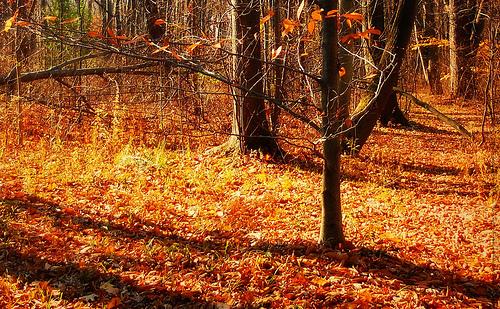 秋をもっと感じたいね