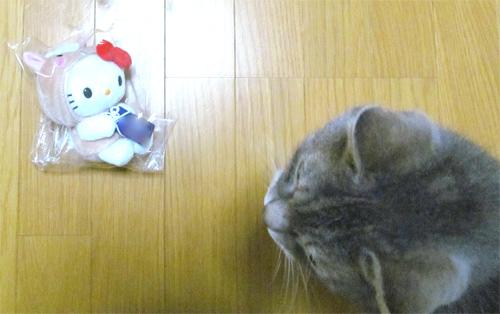 干支ぬいぐるみと向かい合う、我が家のネコ