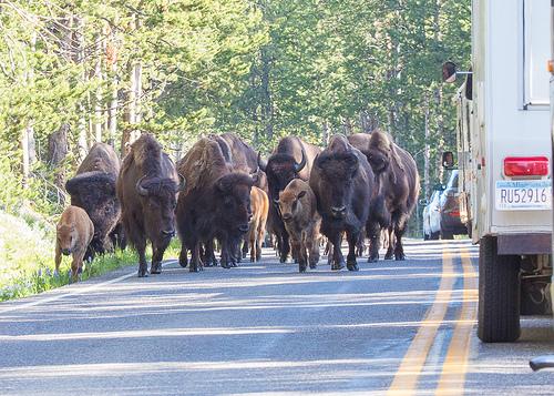 渋滞注意!